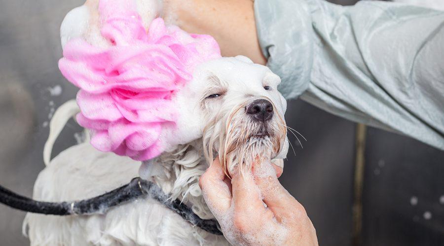 Hundewäsche und Hundeshampoos